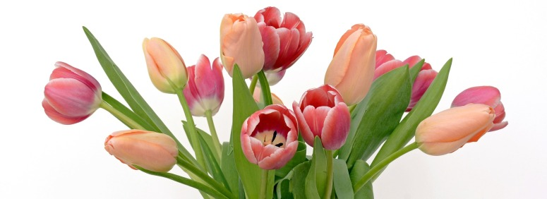 tulips-2152974_1920